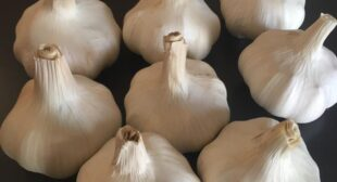 Organic garlic distributor in Mexico based reputed shop