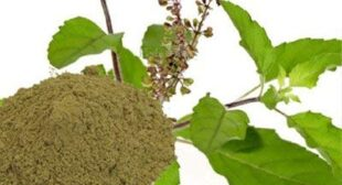 Place order online high quality Tulsi leaf powder