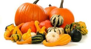 4 Most Popular Winter Squash Available at Online Suppliers